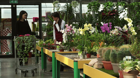 Happy Client Shopping And Florist Talking In Flowers Shop Footage