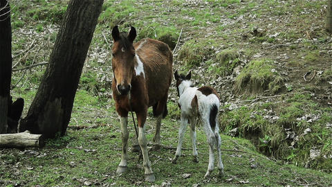 Mama Horse And Baby Horse Footage
