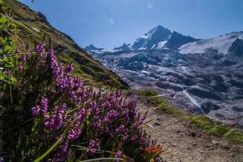 glacier of tour,chamonix,haute savoie,france Photo