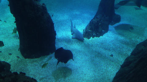 Underwater life of a coral reef. Sharks, rays and other fish. Large aquarium Filmmaterial