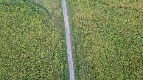 A flight over the road that goes through the fields of sunflowers. Russia, From Footage
