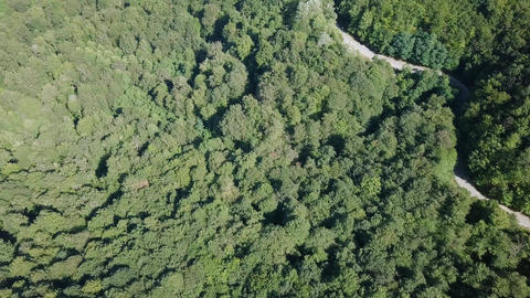The mountains are covered with forest. And a tea plantation. In the middle, a Footage