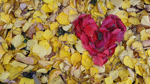 TimeLapse. Background in the form of heart from autumn leaves Image