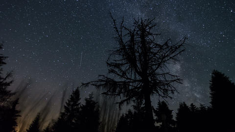 Stars sky with milky way galaxy moving over dead tree time lapse. Astronomy Footage