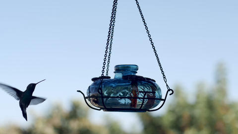 Violet crown hummingbird flies into frame and eats at a feeder in slow motion ビデオ