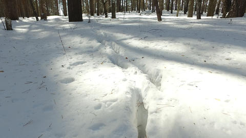 Winter forest. In the footsteps of animals Footage