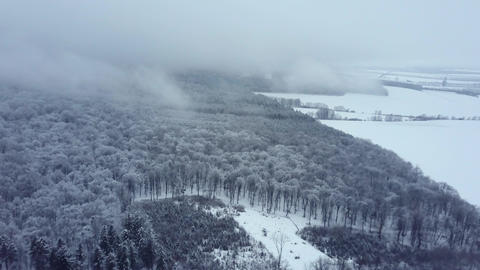Aerial view of forest under a snow Footage