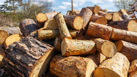 Heap of round pine logs. Time Lapse Footage