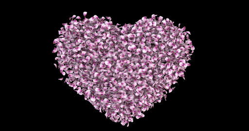 Rotating Pink Rose Sakura Flower Petals In Heart Shape Alpha Matte Loop 4k ภาพเคลื่อนไหว