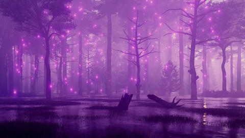 Mystic lights in fairytale swampy night forest Stock Video Footage