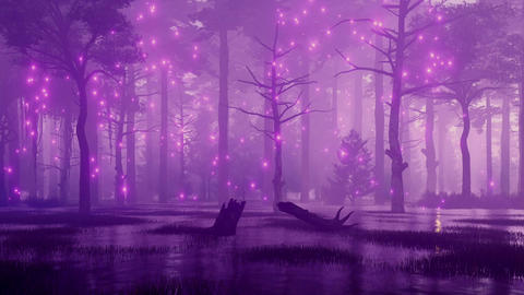 Mystic lights in fairytale swampy night forest Animation