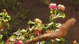 backlight shot of a hummingbird feeding on bright flower pollen Footage