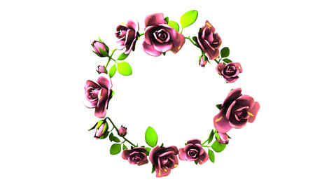 Pink Roses Frame On White Text Space CG動画素材