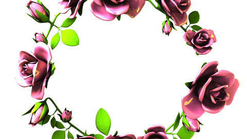 Pink Roses Frame On White Text Space Animation