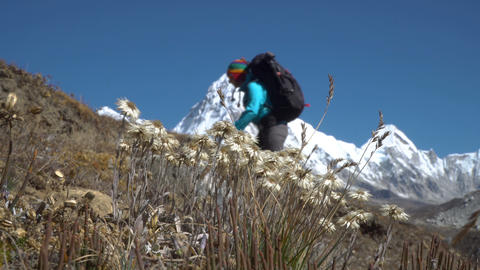 Edelweiss and a tourist in the Himalayas Footage