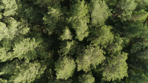 Background beautiful green wild forest aerial view Footage
