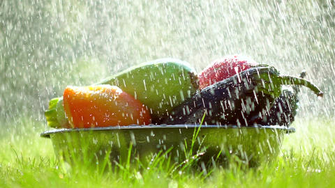 Fresh vegetables in a bowl and scattering water drops super slow motion video Footage