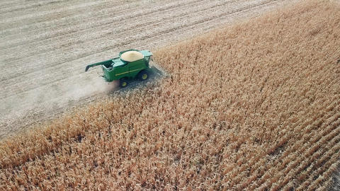 Harvesting of corn. Harvester gather corn from the field. Russia, From Dron Live Action