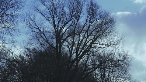 Bald trees in the winter - HAMBURG, GERMANY DECEMBER 23, 2015 Live Action