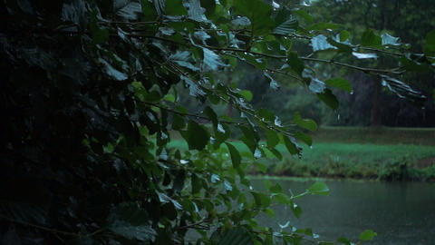 Rain in the early morning Footage