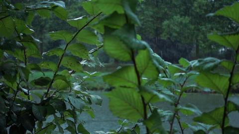 Rain in slow motion Footage