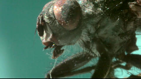 Fly extreme macro Stock Video Footage
