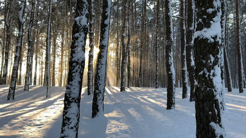 winter forest landscape and sunset Footage