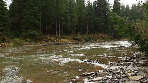 mountainous river Prut in the forest of Carpathian mountains Footage