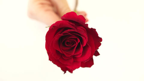 Red rose in hand ビデオ