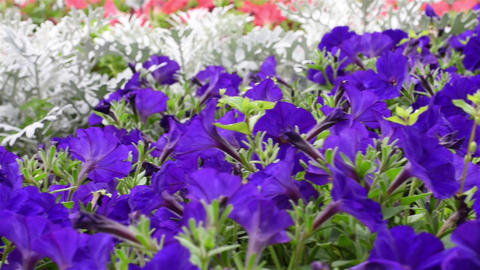 Flower bed with flowers Stock Video Footage