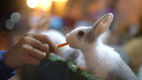Female hand feeding rabbit with carrot close-up 영상물