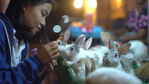 Young Asian Woman feeding rabbit with carrot close-up Footage