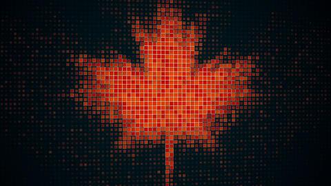 Maple leaf shape on monitor seamless loop animation Animation