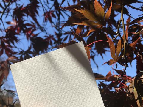 blank white paper with beautiful maple leaves and nice blue sky on background フォト