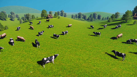 Herd of cows on a pasture aerial view Footage