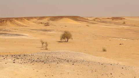Desert Landscape in Rajasthan India Footage