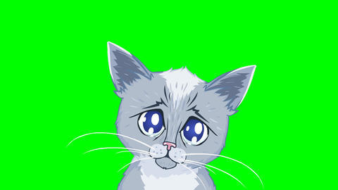 Cartoon Kitten with Tearful Eyes Animation