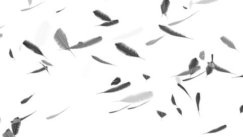 Falling feathers on a white background Animation
