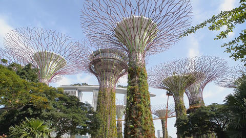 Botanical garden, Gardens by the Bay in Singapore Live Action