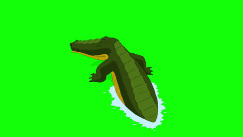 Crocodile Attacks Back View Chroma Animation