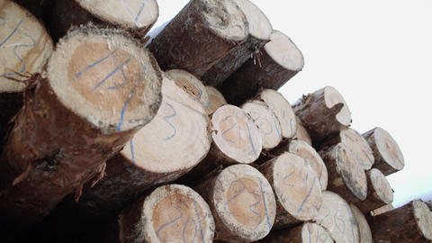 Wood logs heap with numbers markers at sawmill Footage