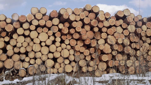 Panoramic view of piles cutted down tree logs in snow outside woodwork factory Footage