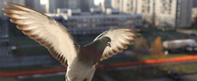 Fly Doves stock footage