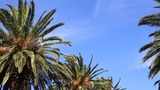 waving palm trees and sky Footage