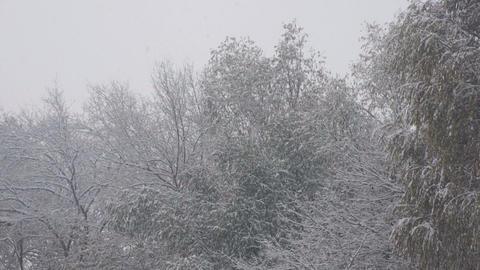 Snowfall 04 Stock Video Footage