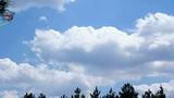 Kite in the skies Footage