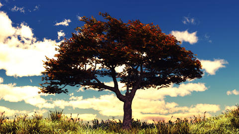 Autumn tree on sunny hill Stock Video Footage