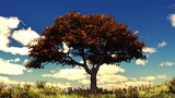 Autumn tree on sunny hill Animation