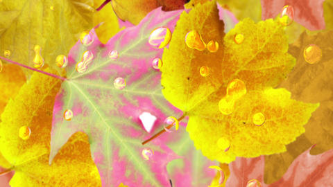 Autumn leaves background. Loop Stock Video Footage