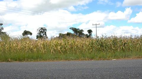sugar cane Stock Video Footage